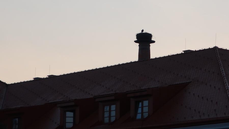 19. března 2020 – pivovarský komín a návštěva čápů (2 °C)