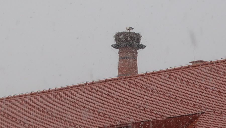 31. března 2020 – pivovarský komín a návštěva čápů (2.1 °C)