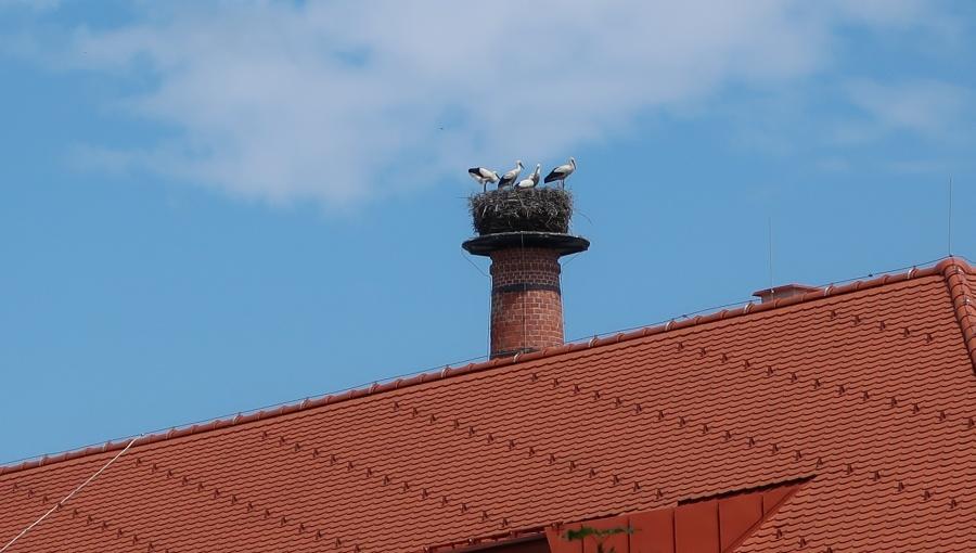27. června 2020 – pivovarský komín a návštěva čápů (26.7 °C)